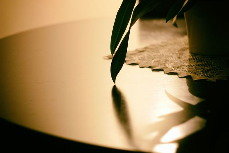 Cropped image of potted plant on table