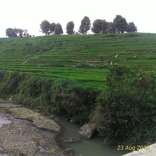 Sawah Village Practice Practicedaily Indonesia_photography INDONESIA Wonogiri Awesome Green Trees Water