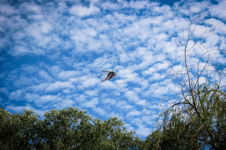 Animal Themes Animal Wildlife Animals In The Wild Beauty In Nature Bee Cloud - Sky Day Flying Insect Low Angle View Nature No People One Animal Outdoors Sky Tree