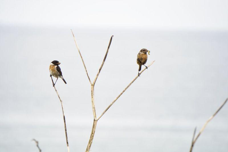 8086 Bird