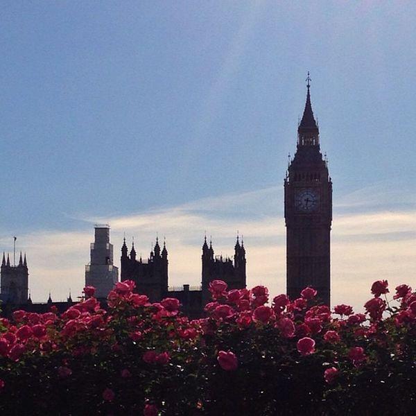 Ben & Roses ?⏰☀️??? #bigben #flowers #sunset #alan_in_london #gf_uk #gang_family #igers_london #insta_london #london_only #thisislondon #ic_cities #ic_cities_london #ig_england #love_london #gi_uk #ig_london #londonpop #allshots_ #aauk #lom_hgf Gf_uk Flowers Alan_in_london Sunset Insta_london Thisislondon London Gi_uk Igers_london Ig_england Royal Love_london Bigben Ic_cities_london Gang_family Ig_london Unitedkingdom Aauk Londonpop Lom_hgf Allshots_ London_only Ic_cities