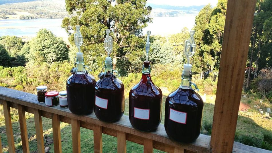 Blackberry Mead 4 ways and some Tinctures