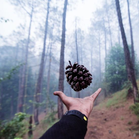 Close-Up Of Hand Throwing Pine Cone In Forest