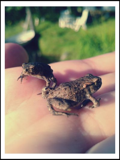 Found some new friends Frogs Discovery