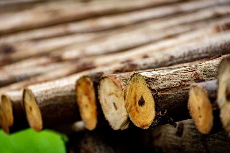In A Row Bark Textures and Surfaces Surfaces Timber Wood - Material Wood Textured  Texture Wood - Material Close-up Axe Tree Ring