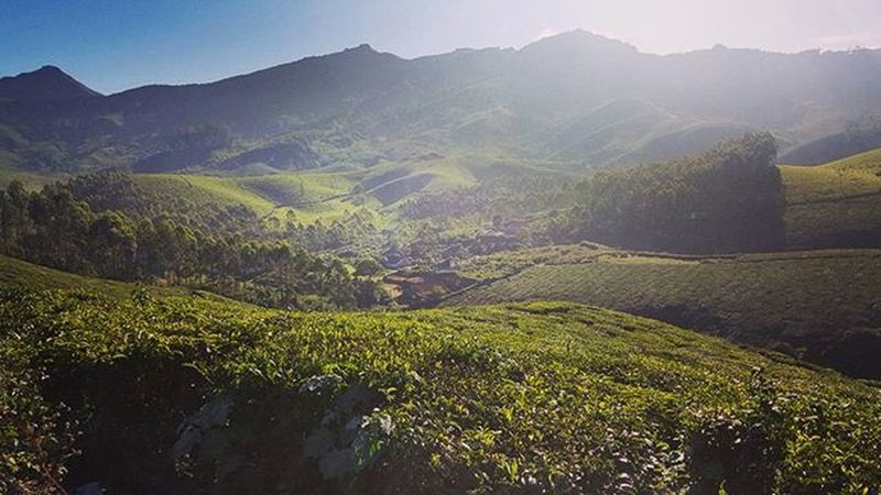 Picoftheday S6shot Munnar Hillstation Town Kerala GodsOwnCountry Teaplantations Clouds Greenery Mayfair Instafilter Instalike Keralatourism BeenThereDoneThat Nature Peacefulness Teaestates Morningshot