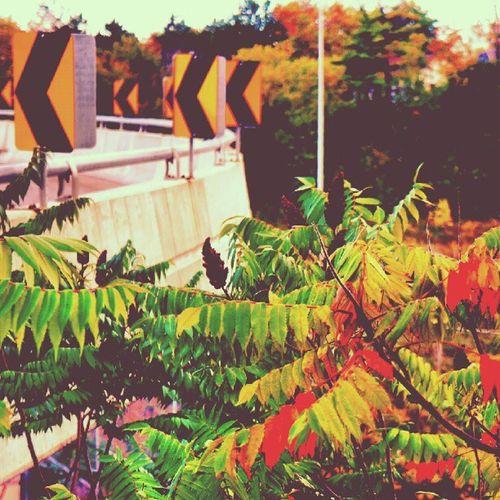 chevron Hike Chevron IGDaily HamOnt Nex5n Redhill Hwy Nature Sky Vintage Highway Fall Foliage Retro Sign