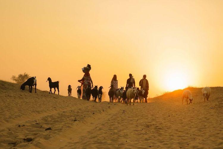 evening Rajasthan EyeEm Best Shots Eyemphotography Linda Sand Dune Following Desert Sunset Sand Working Rural Scene Men Riding Sunlight