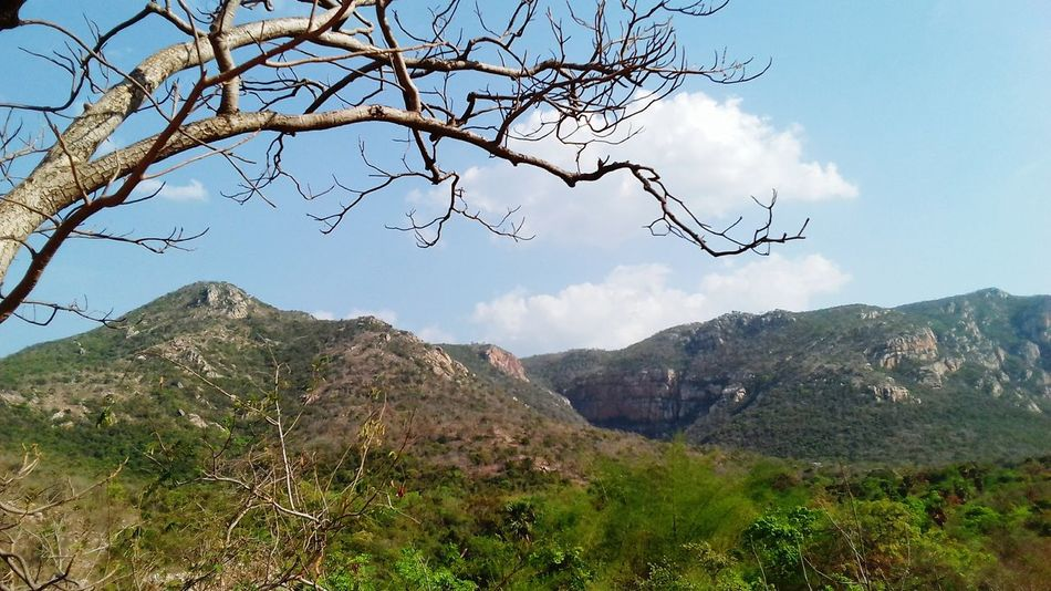 Mountain Tree Nature No People Mountain Range Landscape Sky Day Beauty In Nature Outdoors