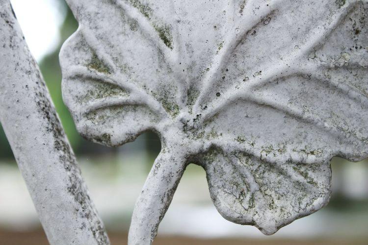 Detail Steel Metal Leaf Leaf Vegetable Rusted Rusty EyeEmNewHere Close-up Leaf Vein