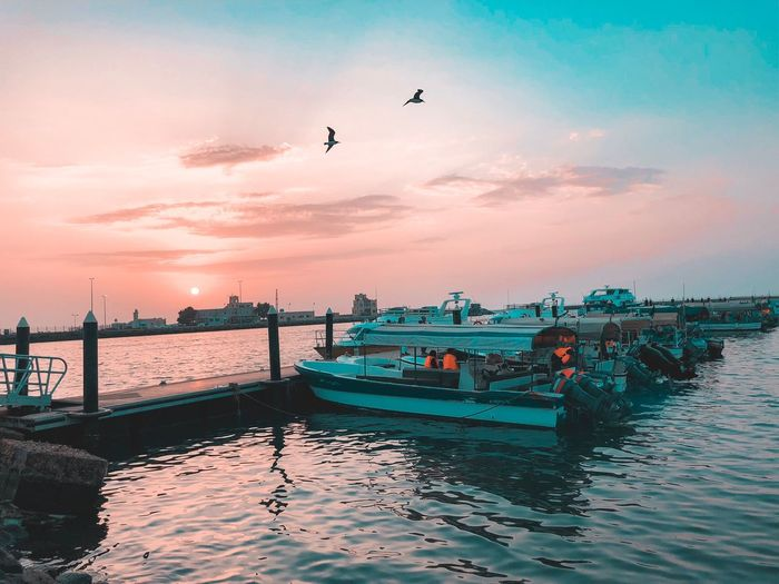 Iphone8plus Iphoneonly EyeEmNewHere Portrait Photography Water Sky Transportation Nautical Vessel Sea Sunset Mode Of Transportation Animal Nature Beauty In Nature Animal Themes Group Of Animals Flying Animal Wildlife Scenics - Nature Bird Animals In The Wild Cloud - Sky Vertebrate