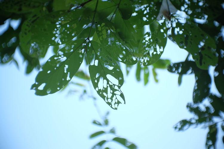 Leaf Plant Tree