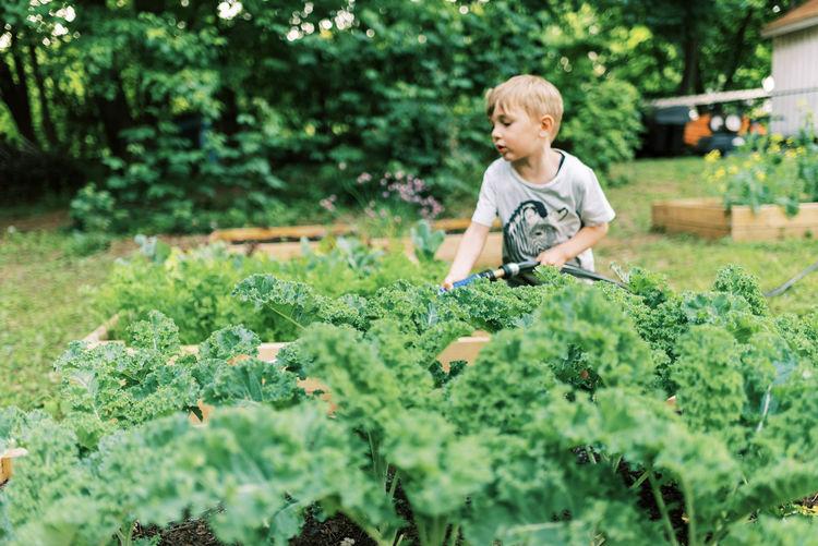 Full length of boy holding plants in garden