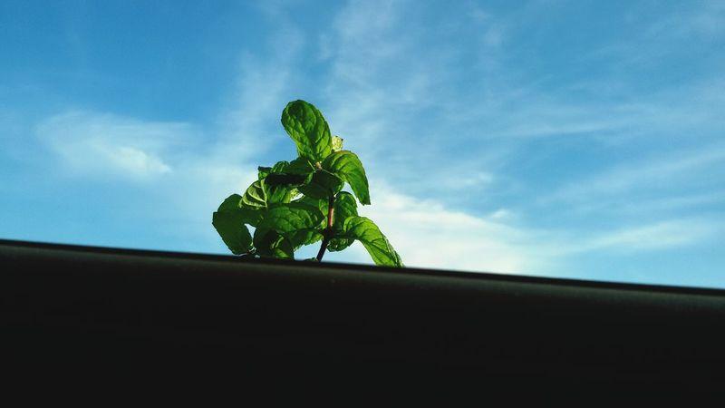 Good Morning Hi! Enjoying Life Hello World Taking Photos Mint Mint Green Sky Sky_collection Gaza-Palestine