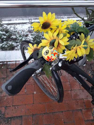 a little bit of snow can'nt stop me🚴♂️ Another Sunny Winterday😍 Simple Beauty Simple Photography Lucky Me🦄 Bicycling For My Friends 😍😘🎁 Happyness Thankful🦄 Life Is Motion Mood Captures Colors Are My Life😍 My Bicycle And Me Flower Water High Angle View Close-up