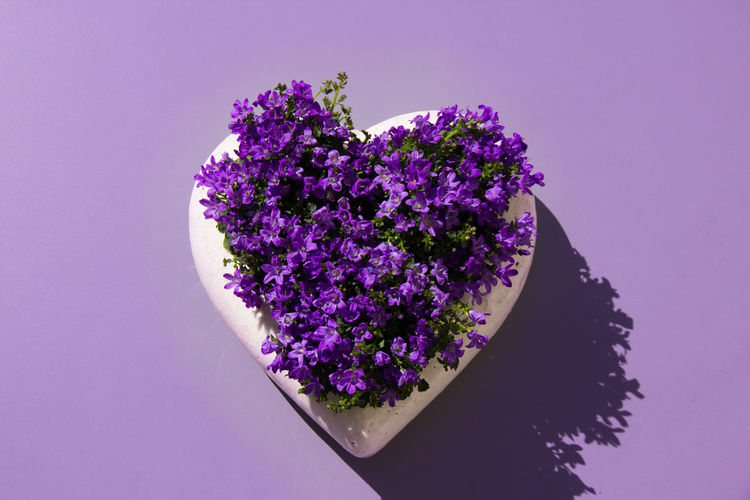 Close-up of fresh purple flowers in heart shaped plant pot