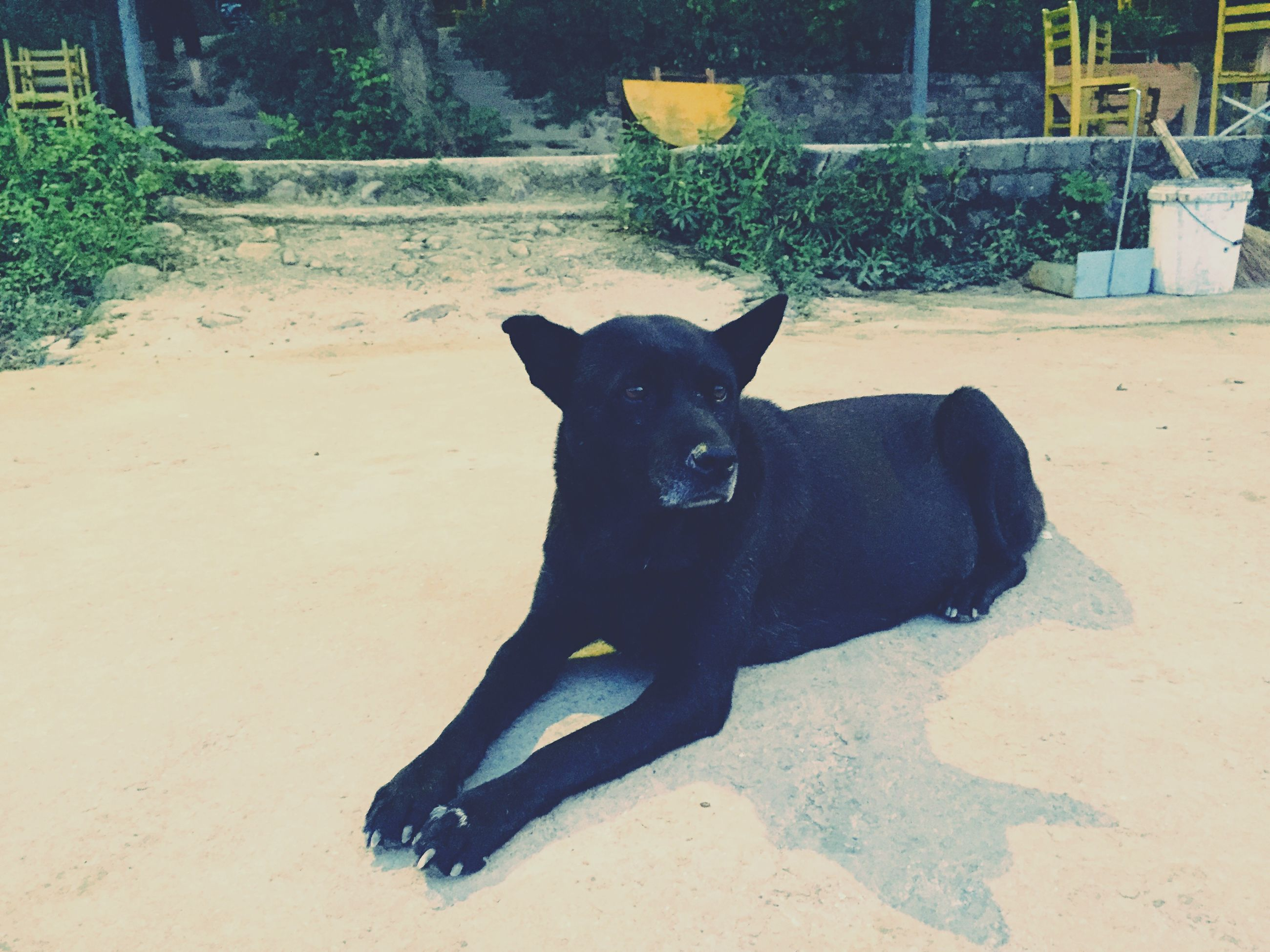 pets, domestic animals, one animal, mammal, animal themes, dog, black color, sitting, relaxation, sunlight, shadow, lying down, outdoors, looking at camera, domestic cat, portrait, full length, pet collar, day, no people