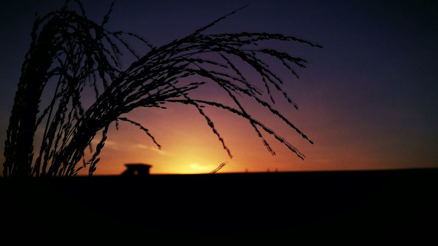 Sunsets Sunsets And Flowers Silhouette Photography