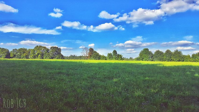 Agriculture Field Growth Cloud - Sky Tree Beauty In Nature Nature Green Color Sky Tranquility Outdoors Tranquil Scene Flower Freshness No People Day Grass in Königswinter, Germany The Week On EyeEm