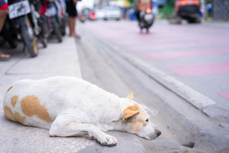 dog lying on
