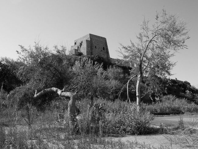 Trees and coastal tower of Scalea Black & White South Italy Architecture Blach And White Black And White Black And White Photography Building Exterior Built Structure Calabria Coastal Tower Grass Outdoors Scalea Tower Travel Destination Tree
