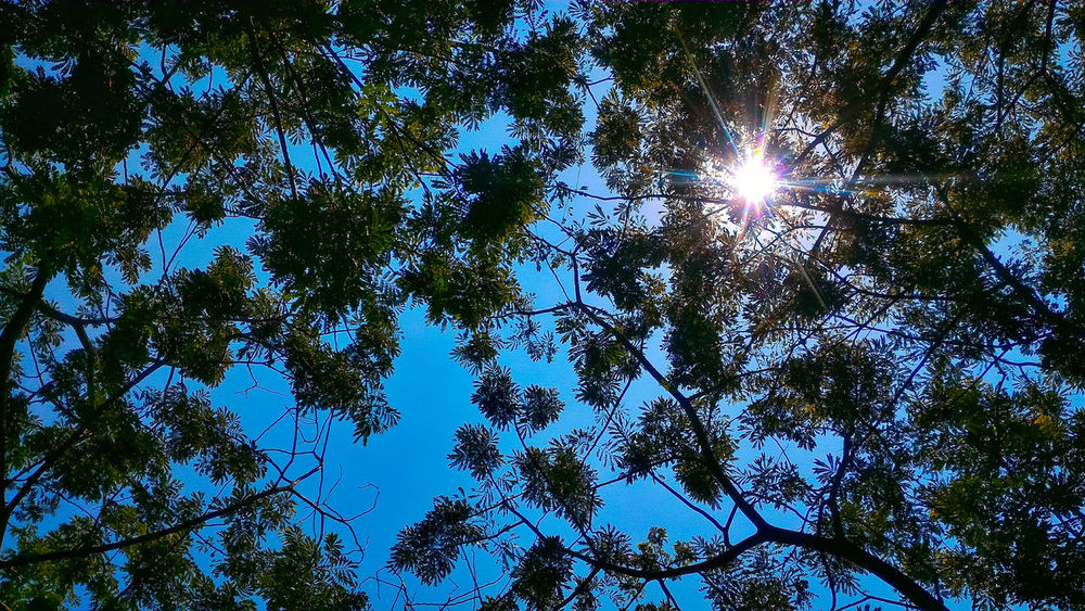 Low Angle View Blue Backgrounds Full Frame Nature Beauty In Nature Tree Sky No People Outdoors Day Growth Clear Sky Eyeemmarket Eyeem Market EyeEm Market © EyeEm Gallery PhonePhotography EyeEm Best Shots Nature EyeEm Summer Lost In The Landscape EyeEm Nature Lover EyeEm Indonesia Phonephotographer