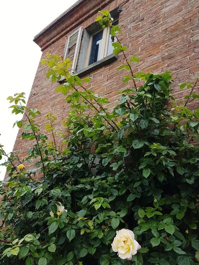 Architecture Building Exterior Built Structure House Low Angle View Growth Outdoors Plant Day No People Green Color Roof Flower Nature Langhe Piedmont Italy