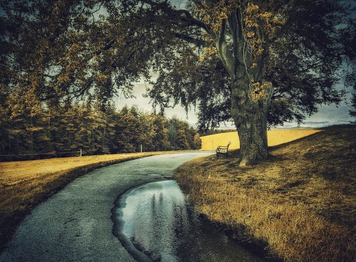 It's a rainy day Tree Road Tranquility Tranquil Scene Landscape Grass Tree Trunk Countryside Nature Non-urban Scene Solitude Outdoors Melancholic Landscapes Capture The Moment Austria A Photo Like A Painting Relaxing Moments Landscape_photography Weather