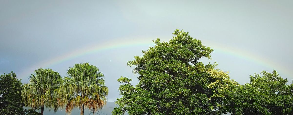Rainbow Nature Tree Sky Outdoors Tropics First Eyeem Photo Australia Tropical Climate