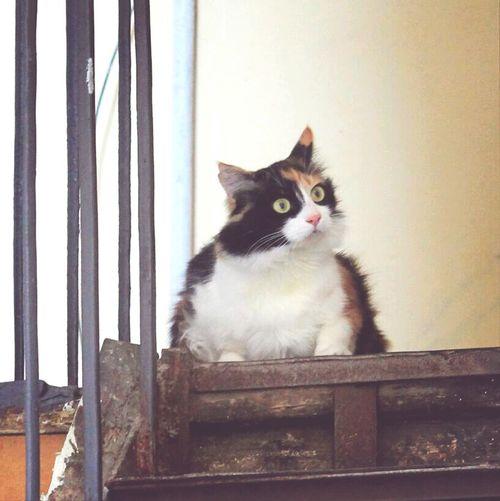 Cat Cat♡ Cat Watching