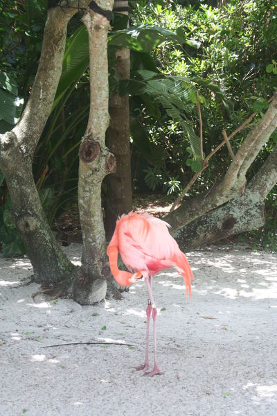 Animal Themes Bird Day Flamingo Flamingos Flamingos In Water Flamingos Up Close Florida Birds Florida Keys Florida Life Florida Nature Keys Nature No People Outdoors Pink Color Pink Flamingos Pink Flamingos USA