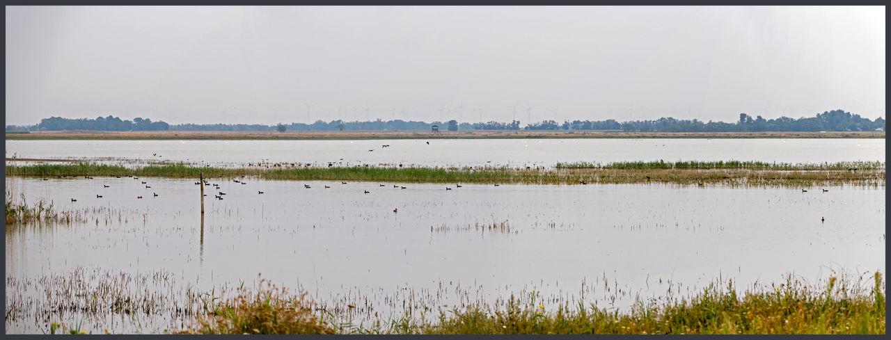 Austria Birds Burgenland Lake Landscape_photography Lange Lacke Panoramic Water