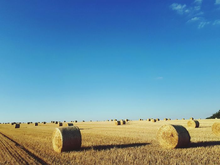 Blue Sky Hay Agriculture Outdoors Day No People Rural Scene Nature Clear Sky Grass