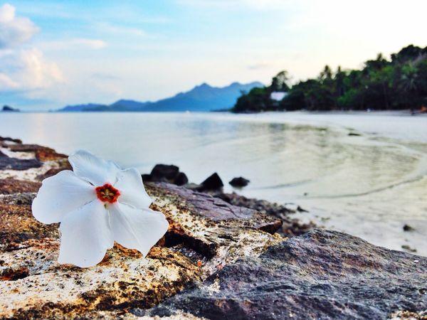 IPhoneArtism Enjoying Life Thailand Beach IPhone5 Beach Photography Flower Relaxing EyeEm Thailand Khochang