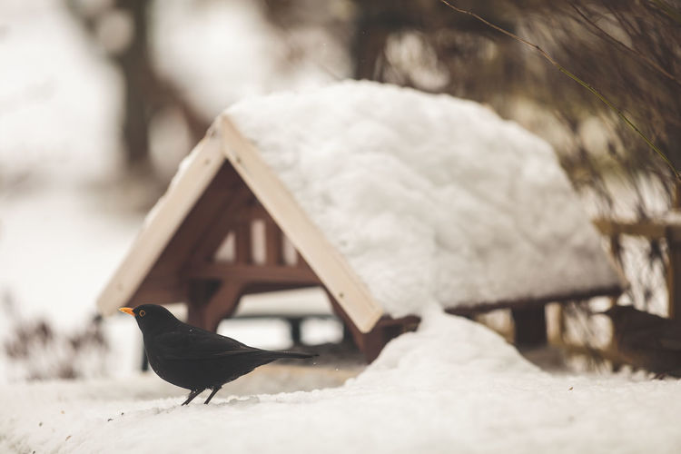Bird perching on snow