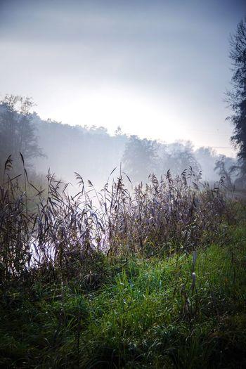 Nature Sky Outdoors Beauty In Nature Water Wasser Nebel Fog Gras  Schilf