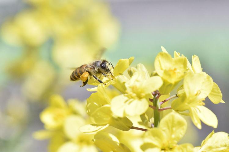HoneyBee Honey