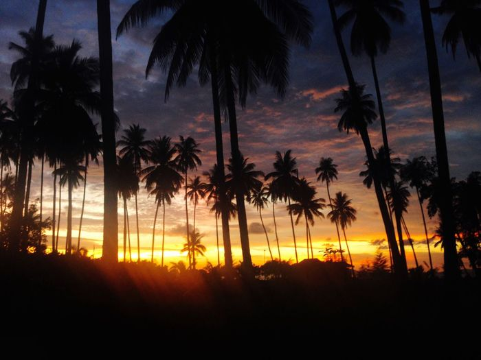 Perspectives On Nature Palm Tree Tree Sunset Silhouette Tree Trunk Nature Tropical Climate Sun Beauty In Nature Growth Scenics Dusk Sky Palm Frond Beach No People Tranquility Tranquil Scene Outdoors Day IPhoneography Summer Views Thailand