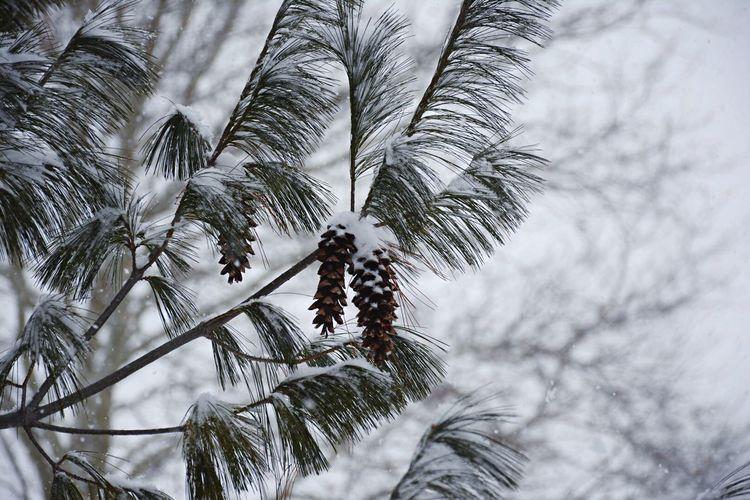 Snow Kar Winter