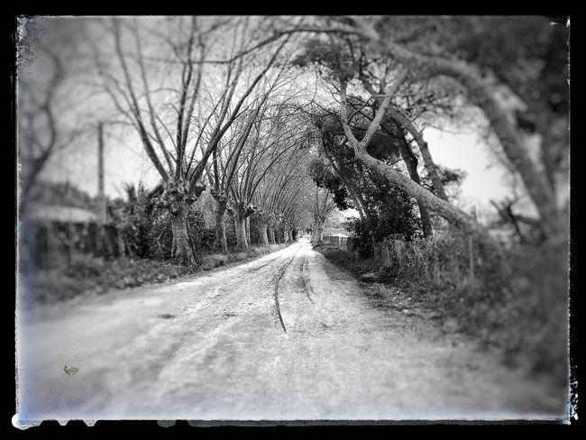 Caminante busca tu camino...!!!