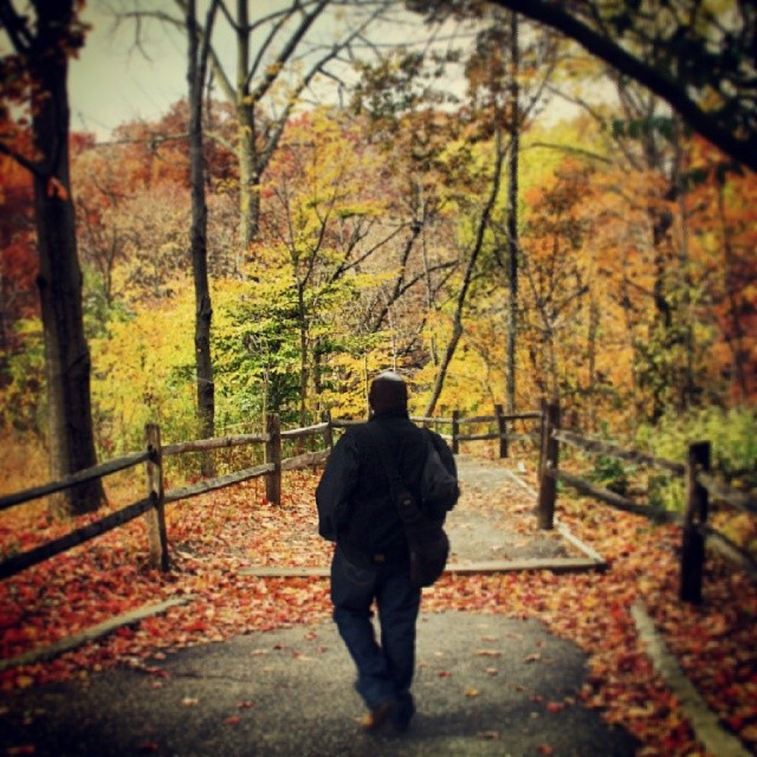 tree, rear view, autumn, season, change, lifestyles, full length, men, leisure activity, forest, walking, tree trunk, person, nature, standing, orange color, casual clothing, tranquility
