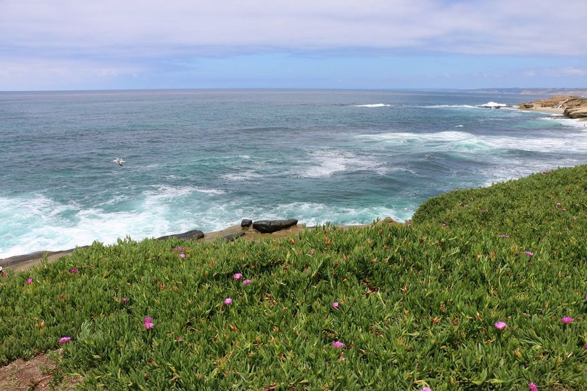 Beach Photography Been There. Daytime Green La Jolla Beach La Jolla, California Nature Plants San Diego Sunny Beach Beauty In Nature Been There, Done That Flower La Jolla Nature No People Ocean Outdoors Scenics Sea Seaside Plants Tranquility Waves Waves And Rocks