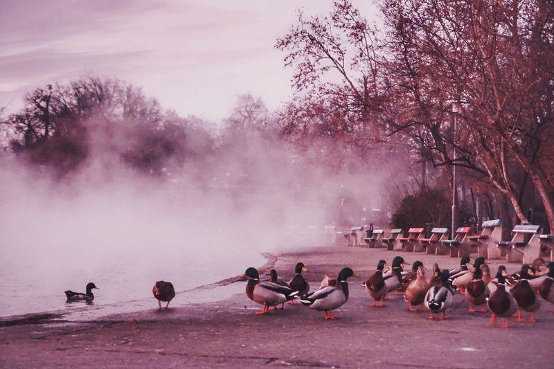 Sunset Budapest, Hungary Budapest Duck Ducks Hotwells Tree Water Nature Plant Sky Outdoors Beauty In Nature Bird EyeEmNewHere