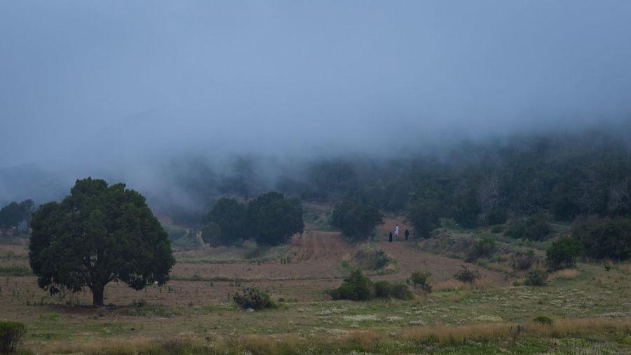 fog at alsoudah