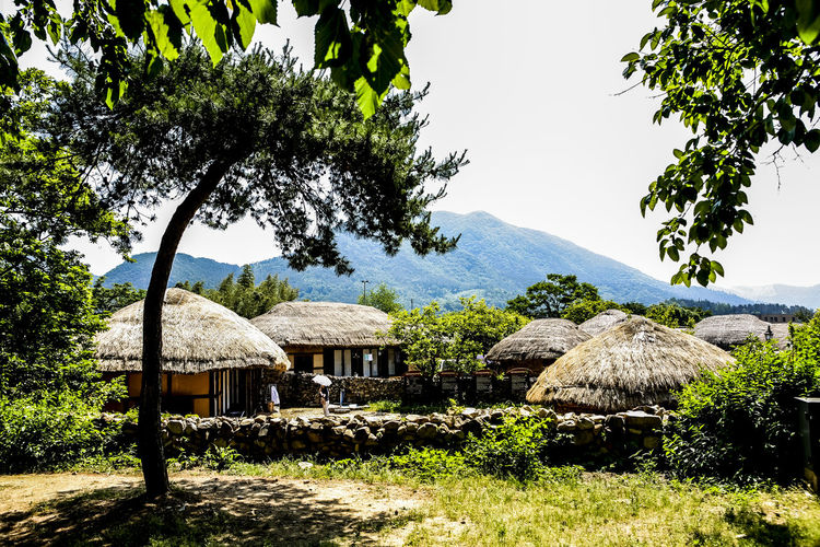 Clear Sky Cultures Day Green Growth House Hut Leading Narrow Nature No People Old Town Old Village Outdoors Relaxing Moments Roof Rural Scene Thatched House Thatched Roof Tree Tropical Tropical Climate Village Wood