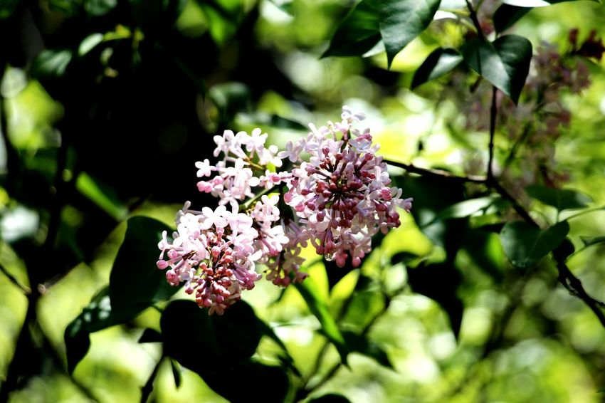 Flower Blossom Fragility Botany Springtime Nature Growth Plant Pink Color No People Branch Tree Beauty In Nature Close-up Flower Head Outdoors Day Freshness The Week On EyeEm