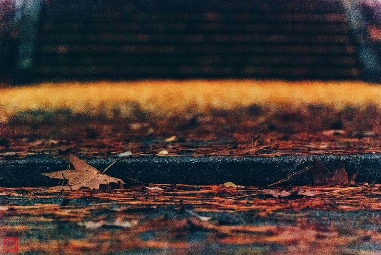 枯れ葉散る参道 Shrine Shrinescape Japanese Shrine Shinto Shrine Autumn Autumn Leaves Ginkgo Fall
