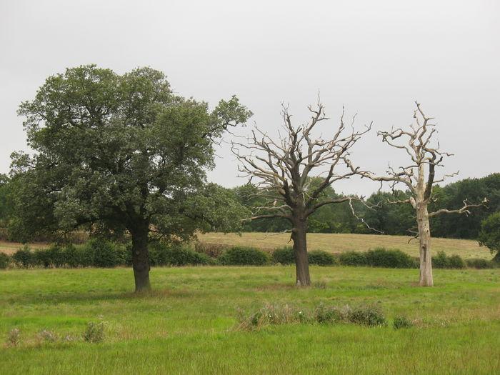 Trees Circle Of
