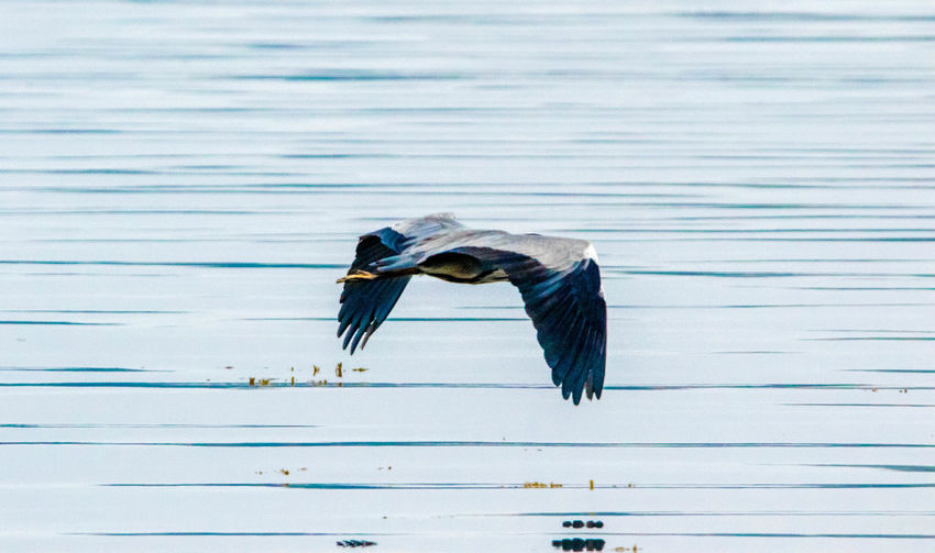 View of bird flying over lake