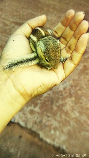 Baby Squirrel Check This Out